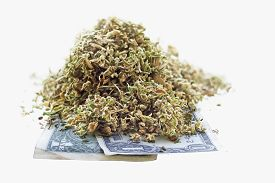 image of seed bearing  - Dried hemp leaves and seeds on one dollar banknotes in a white background - JPG