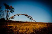 Bending Grain