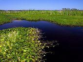 Marsh Opening