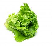 Fresh Leaf lettuce isolated on white with natural shadow.
