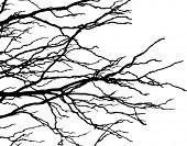 rama de árbol elegante streaming a la derecha