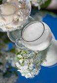 milk with cheese on a background of white spring flowers