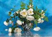 wit roze