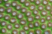 Hard coral background - a series of UNDERWATER IMAGES.