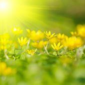 Primer plano de foco suave de flores amarillas