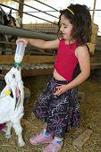 Постер, плакат: девушка кормления Бэй коза с baby бутылки в ферме