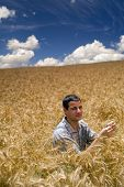 farmer sitting in a wheat field
