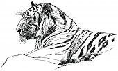 vector illustration of a tiger in jungle