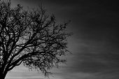 Silhouette Dead Tree On Dark Dramatic Sky Background For Scary Or Death. Halloween Night. Hopeless,  poster
