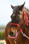 Young Beautiful Horse Posing For Camera. Portrait Of A Purebred Young Horse At Summer Corral. Closeu poster