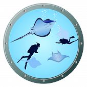Divers and stingrays