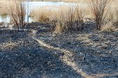 Scorched Spring Dry Grass And Rubbish On Ashes poster