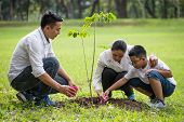Happy Asian Family, Parents And Their Children Plant Sapling Tree Together In Park . Father Mother A poster