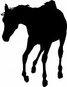 Young horse running silhoutte