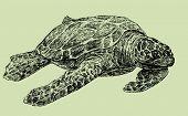 Sea Turtle.eps