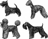 Toy Dogs.eps