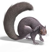 Squirrel 3D Render