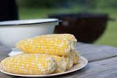 Fresh Sweet Corn For Bbq Party