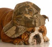 Bulldog Wearing Camouflage Hat