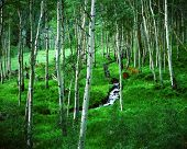 Aspen Grove And Ranch, Maroon Bells Wilderness Area, Colorado