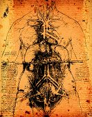 pic of leonardo da vinci  - Anatomy art by Leonardo Da Vinci from 1492 on textured background - JPG
