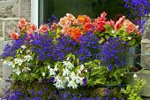 Window box with red, white and blue flowers.
