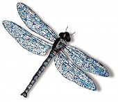 Dragonfly Against White