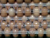 picture of hatcher  - A large froup of fresh eggs sitting on top of a butcher - JPG