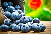 Delicious Fruit Berries In Metal Small Pail
