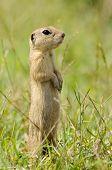 prairie dog on field in summer
