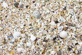 Broken shells on beach