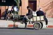 Speedy Donkey