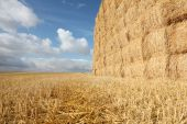 Campo cosechado con pajar & rastrojo