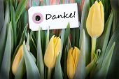 Tulip Background With Danke