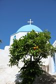 Church And Orange Tree On Paros Island