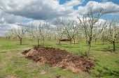 Agriculture, Fertilizer In Orchard