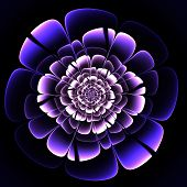 Beautiful Purple Flower On Black Background. Computer Generated Graphics.