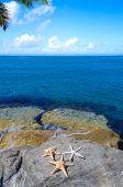 Three Starfishes Next To Sea