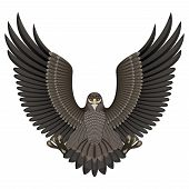 stock photo of cross-hatch  - Vector illustration of an eagle isolated on white background - JPG