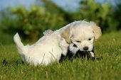 Two sweet puppies are playing and fighting in the sun