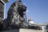 London - lion from Nelson memorial on Trafalgar square