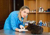 veterinarian and cat