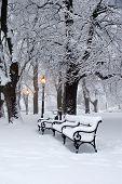 morning in winter park - bratislava