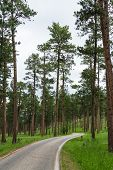 Road Thru The Forest
