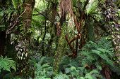 Rainforest, New Zealand