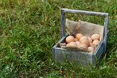 Eggs in wooden basket on grass outdoors