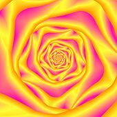 Spiral Rose In Yellow And Pink