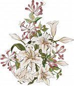 foto of honeysuckle  - Bunch of lilies and honeysuckle isolated on white background - JPG