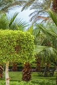 Palm and bush