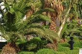 Palm wide